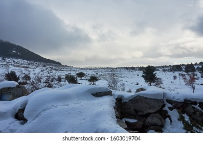 Snow in the Port of Canencia. National Park of the Sierra de Guadarrama. Madrid's community. Spain