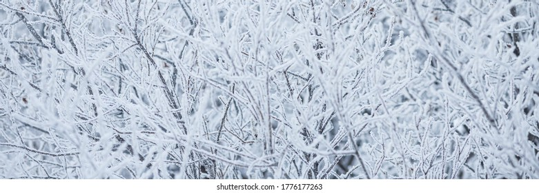 Snow and rime ice on the branches of bushes. Beautiful winter background with trees covered with hoarfrost. Plants in the park are covered with hoar frost. Cold snowy weather. Cool frosting texture.