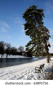 Snow scene with tree and frozen lake