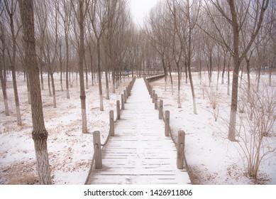 Snow scene of Zhongguancun Forest Park Haidian Beijing