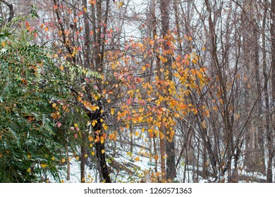 Snow scenes and fall colors