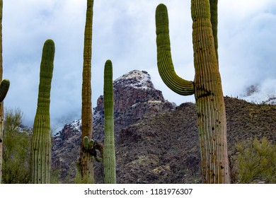 Snow in the Sonoran desert! On February 28th of 2018 a rare weather event brought snowfall to the Catalina mountains, north of Tucson, Arizona where saguaro cacti or cactus dot the landscape.