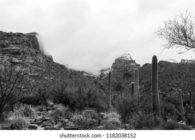 Snow in the Sonoran desert! On February 28th of 2018 a rare weather event, snowfall to the Catalina mountains, near Tucson, Arizona where saguaro cacti or cactus dot the landscape. Black and white.