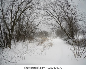 The snow started to fall during the day. The trees are covered and there is a small path. Nice place to walk. Ulverton, Quebec, Canada; May 25, 2020.