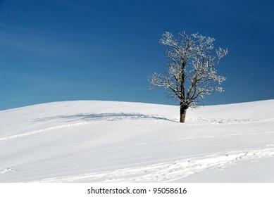 snow and tree in beautiful winter season