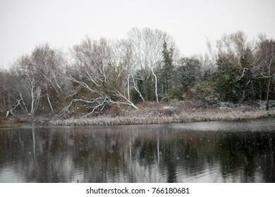 snow tree scene
