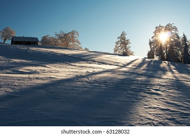 Snow, trees and sun