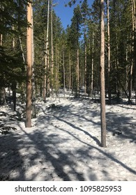 Snow trees Yellowstone national park