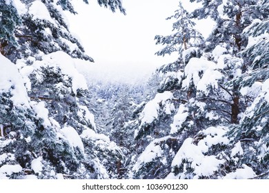 Snow and winter clouds in the forest