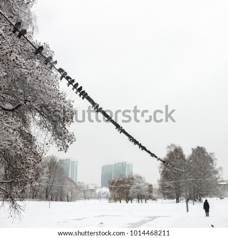 Snow in winter people