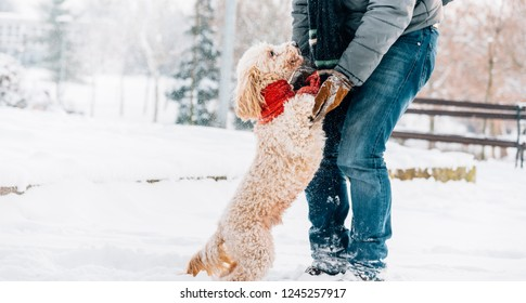 Snowball fight fun with pet and his owner in the snow. Winter holiday emotion. Cute puddle dog and man playing and running in the forest. Film filter image.