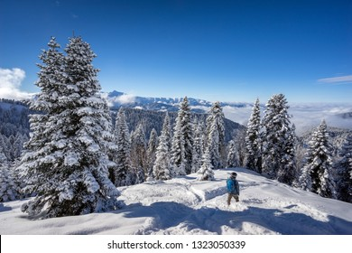 Snowboarder freerider and beautiful landscape with pine trees covered with snow on background blue sky after snowfall on ski resort of the Caucasus mountains