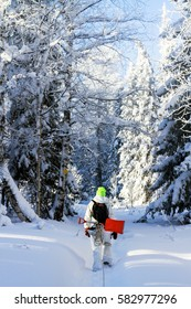 Snowboarder with a shovel goes through the woods in winter