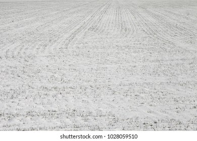 Snow-bound wind-swept tillage in winter day. Snowy field. Outfield under snow. Land snowed in. Windswept ground in winter afternoon. Lan under snow. Snow-covered arable land. Windburned snowy ager.