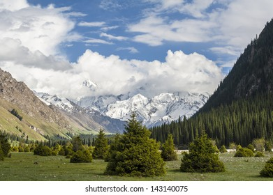 Snow-capped mountains and the pines