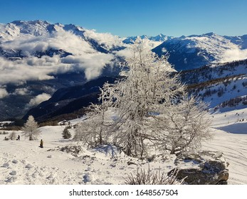 Snow-coated tree with the Maurienne peaks in the background