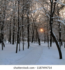 The snow-covered alley in the winter park is lit by the orange sunset.
