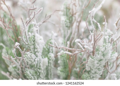 Snow-covered branches of spruce and wood. Background soft focus.