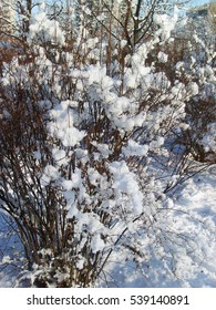 Snow-covered bush