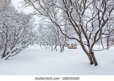 Snow-covered city square. After the snowfall there is a lot of snow and big snowdrifts. On the branch of a tree hanging birdhouse. Cold winter weather. Magadan, Siberia, Far East of Russia.