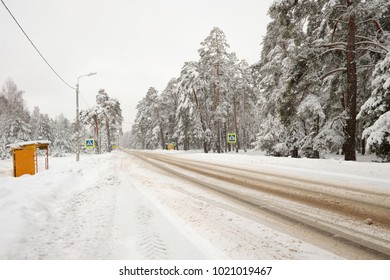 Snow-covered country road. Pine forest.