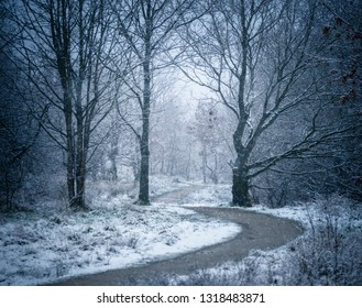 A snow-covered English country lane lined with oak and holly trees, Greater Manchester, UK.