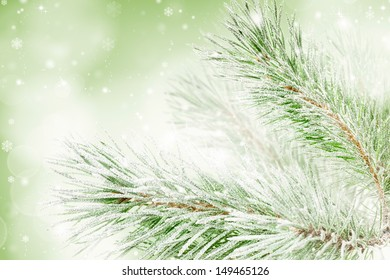 Snow-covered fir Christmas tree branch