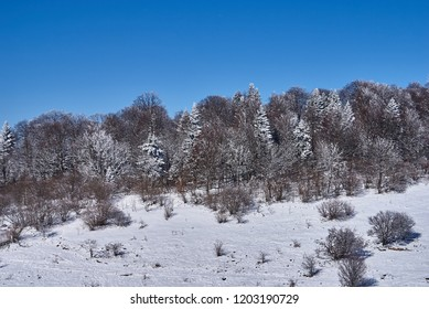Snow-covered forest, in the foreground a snowy meadow, against the background - a blue sky. Lago-Naki, The Main Caucasian Ridge, Russia