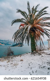 Snow-covered palm tree. Palm covered with snow. Winter on the coast of Montenegro, in Budva.