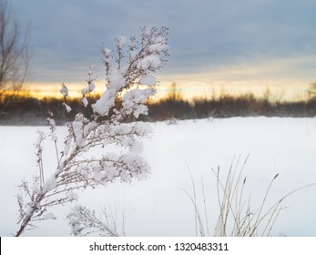 Snow-covered plants and trees