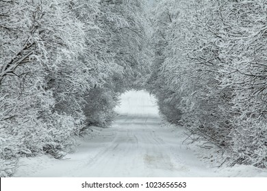 snow-covered road in the form of a tunnel