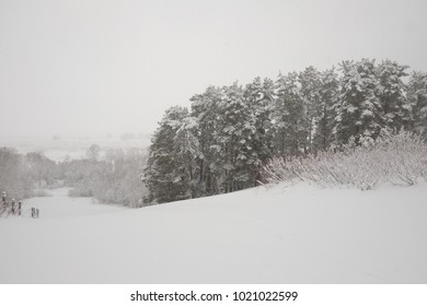 Snow-covered slope with pine forest.