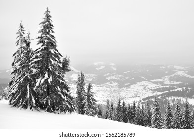 Snow-covered tall spruce trees against a bright sky. Winter landscape, pine forest in the mountains