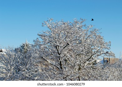 snow-covered tree against the blue sky