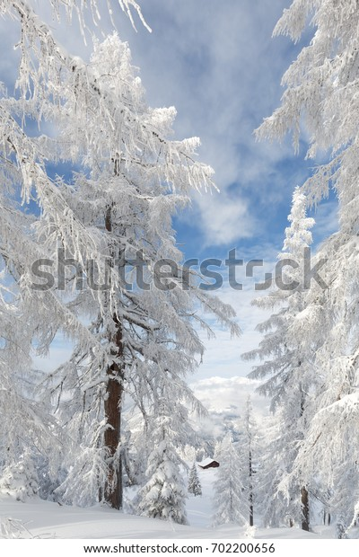 Snow-covered trees in Austrian alps