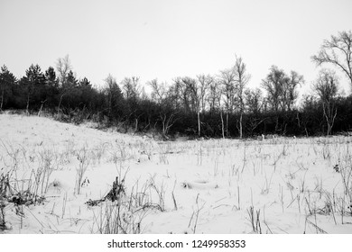 Snow-covered trees in the forest.