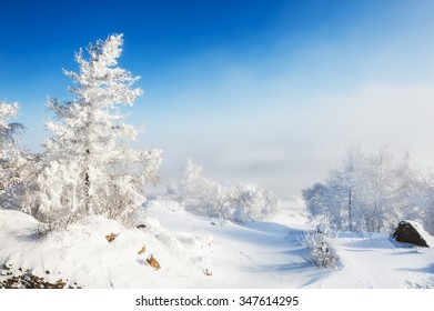 Snow-covered trees in the mountains. Beautiful winter landscape.