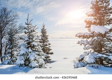 Snow-covered trees near the frozen lake. Beautiful winter landscape.