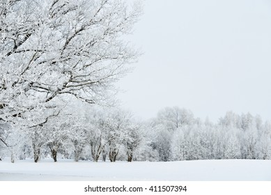 Snow-covered trees on a field