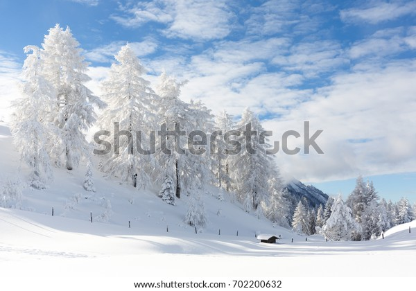 Snow-covered trees in winter forest after snowfall