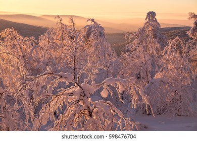 Snow-covered trees of winter forest with sunset illumination