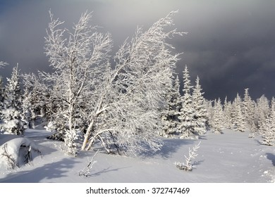 Snow-covered trees in winter in the mountains of the Southern Urals.