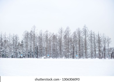 Snow-covered Winter Kingdom
