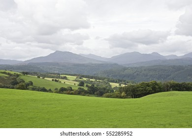 Snowdonia mountain range Wales, UK, with green meadow and tree in foreground