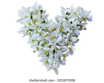 Snowdrop little flowers heart isolated on white background. Floral snowdrop heart shape on white, copy space. First spring small flowers - snowdrops heart. Snow drops flowers, love sign in 8 march day