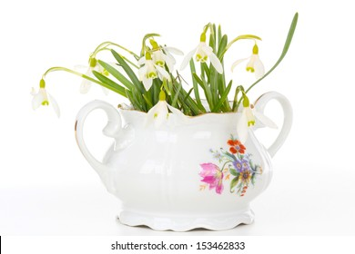Snowdrops in Sugar Bowl