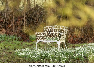 Snowdrops and white wrought iron seat