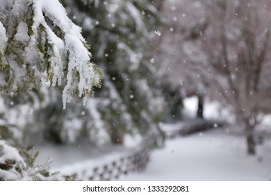 A snowed in path with a icy blurred background.  The trees are covered in fresh snow.