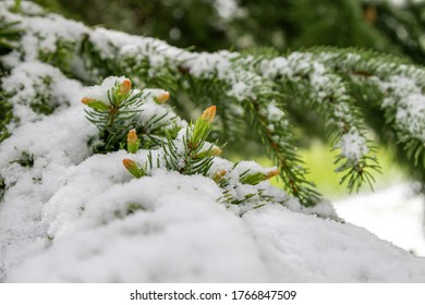 Snowfall during summer. Trees and grass covered with white snow.