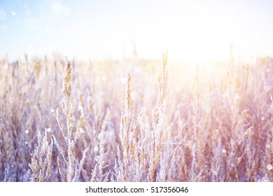 Snowfall in the field. Bush Grass covered with ice crystals. Winters park snowflakes falling.  Snowfall on defocused background. Blurred snow flakes. Winter blurred background with copy space area.